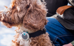 There's a device that's like a fitbit for dogs which is definitely necessary