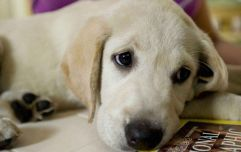 This website will warn you if a dog dies in a movie
