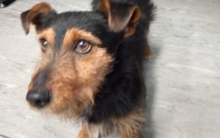 The dog that was found on an Irish Rail train today is still looking for its owner