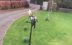 Jogger in Kildare gets chased by a rogue goat and it's bleating hilarious