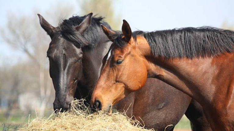 6,573 horses were killed in Ireland for human consumption last year