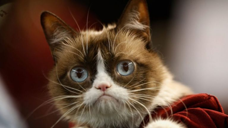 Social media sensation Grumpy Cat has died aged 7