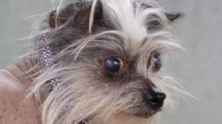 People won't adopt this dog because she's 'ugly', and we're bawling