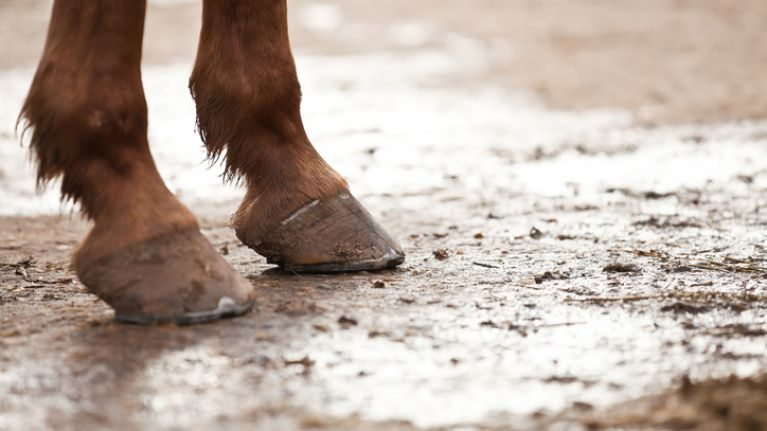 €278k racehorse found starving on Cork farm after weeks of abandonment