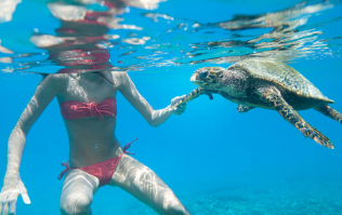 Luxury hotel in the Maldives is hiring someone to look after its turtles this summer