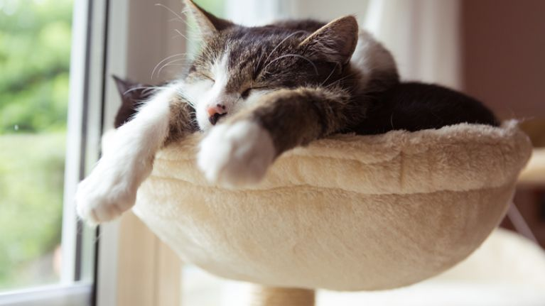 Cat ladies unite! Research shows that owning a cat is good for your health