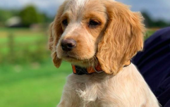 The Gardaí have a new puppy recruit and they're looking for name suggestions