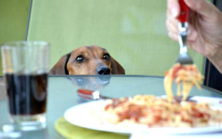 We're giving our dogs a LOT of calories by feeding them from the dinner table