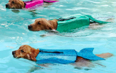 Mermaid life jackets for dogs are a thing so your pooch can stay safe while he swims