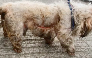 Dog dies after being 'eaten alive' by maggots in Dublin housing estate
