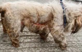 Dog dies after being 'eaten alive' by maggots in Dublin housing estate