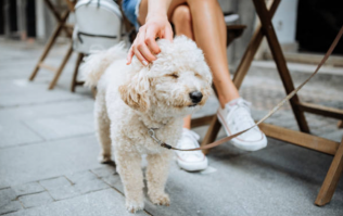 6 gorgeous dog-friendly places to eat and drink in Cork this summer