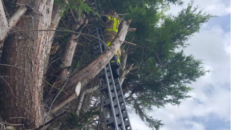 Everyone is howling at this cat's reaction after a Dublin fireman rescues it from a tree