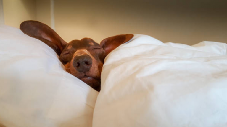 Dogs dream about their owners in their sleep and we're completely overjoyed