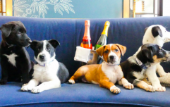 This hotel will deliver puppies and prosecco to your room making it the GREATEST place to stay