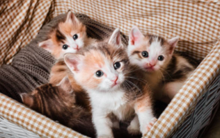 The ISPCA are trying to rehome 91 cats and kittens in Longford, Donegal, and Cork