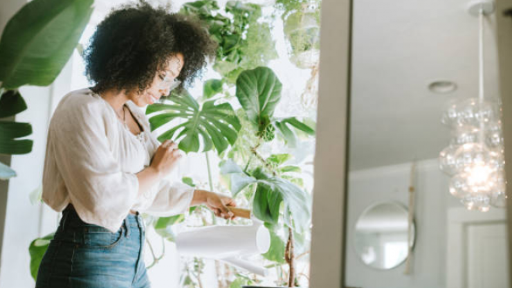 There's a hotel for house plants to keep them 'safe' while you're on holiday