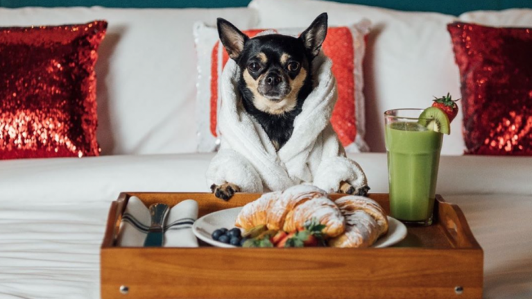 Dream job alert: You and your dog can team up to review hotels together
