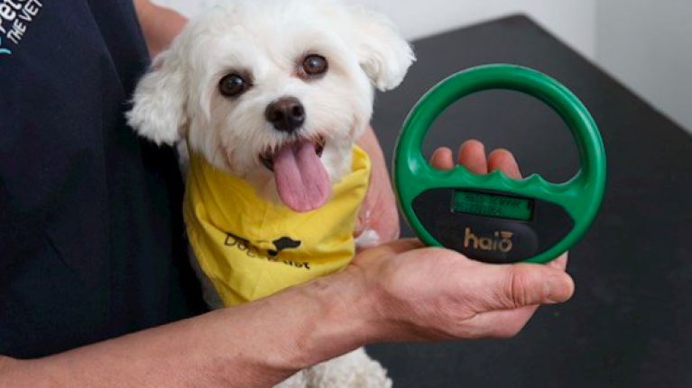 Dogs Trust offering free microchipping certificate amnesty this week
