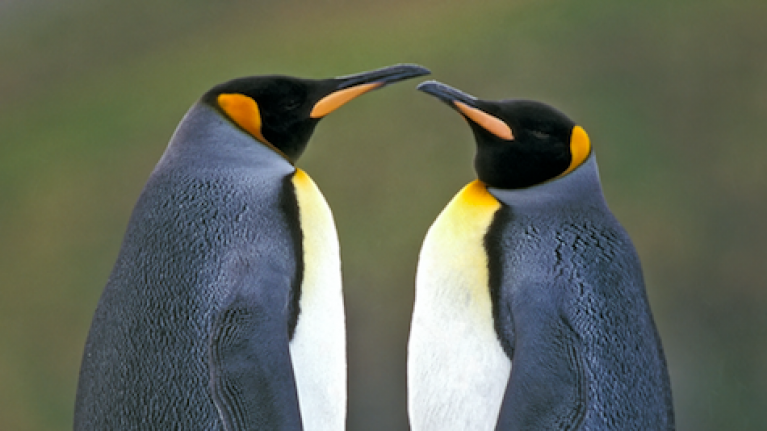 Two gay penguins adopt abandoned egg in Berlin zoo
