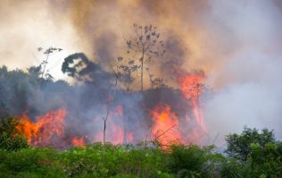 Brazil's Amazon fires have now hit an all-time record high