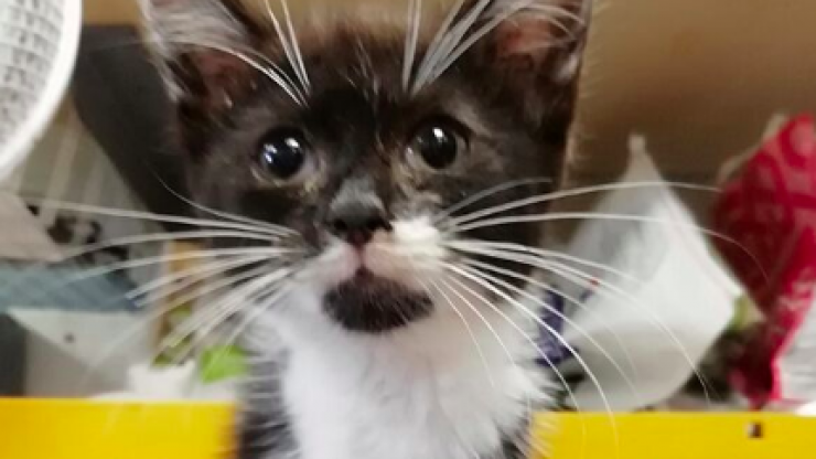 Abandoned kitten with radial nerve paralysis rescued in Kildare