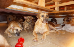 Woman takes in 97 stray dogs to save them from hurricane in the Bahamas