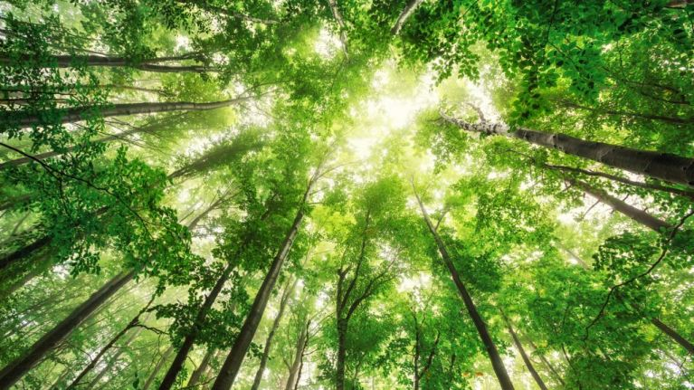 Denmark to plant almost one million trees after first climate change focused telethon