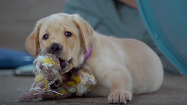 Netflix have added an excellent documentary about puppies that train to become guide dogs