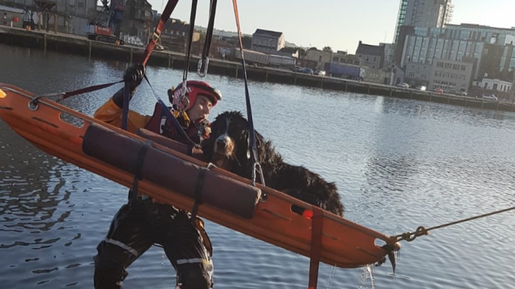 Woman rescued from river in Cork after jumping in to save pet dog