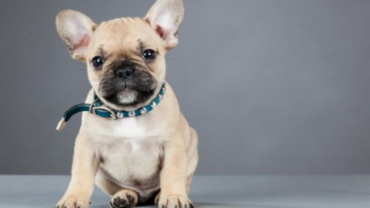 These were the 10 most popular DOG names last year