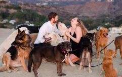 This lovely man proposed to his girlfriend with the help of 16 very lovely dogs