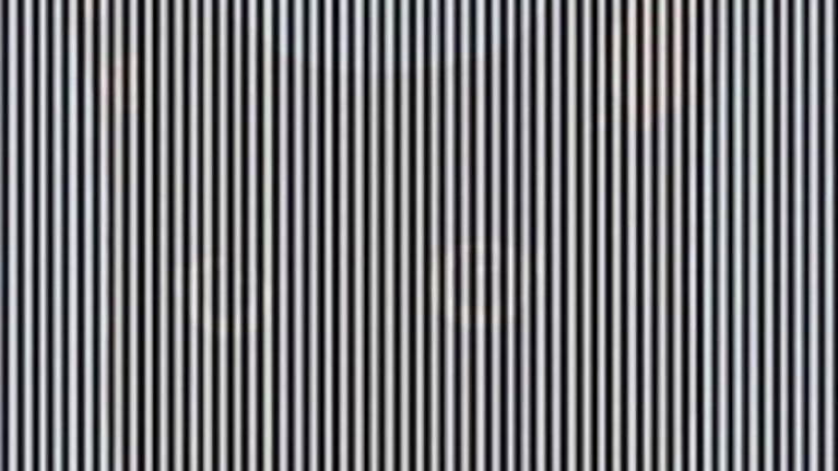 There's an animal hiding in this black and white optical illusion - can you spot it?