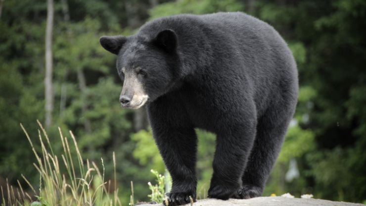 A 3-year-old boy that went missing in the woods says a BEAR looked after him