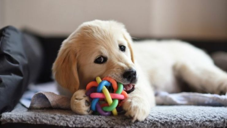 Company hiring someone to play with puppies all day in UK
