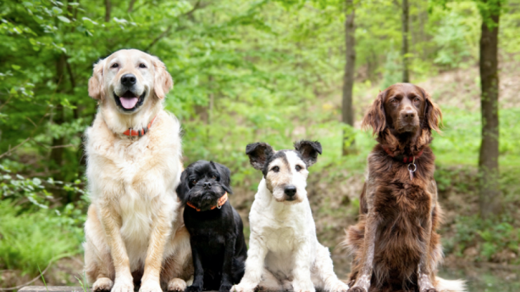 Research says that humans love dogs more than other humans