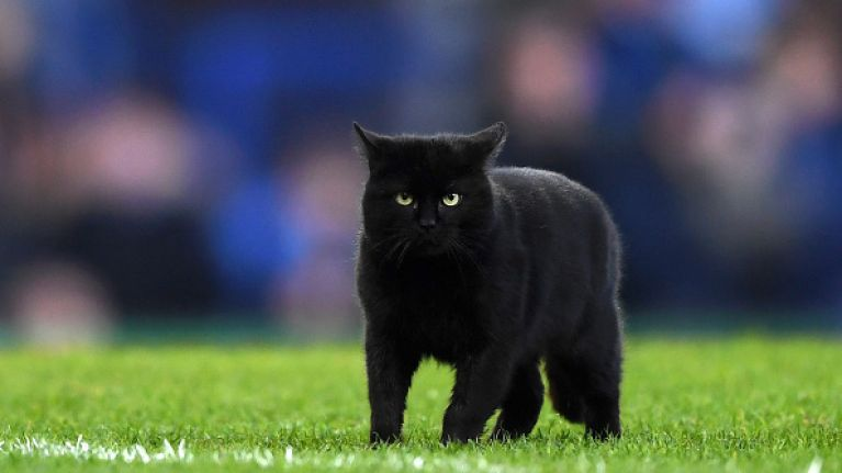 A black cat caused mayhem at an Everton game recently and we're roaring laughing at the video