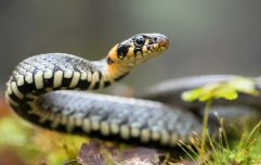 Your wish has been granted: An Aussie Zoo is letting you name a snake after an ex