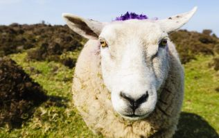 Boohoo announce they will continue to sell wool products, hours after saying they wouldn't