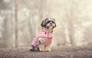 Protected pooch - Aldi is dropping the cutest range of DOG jackets from €13