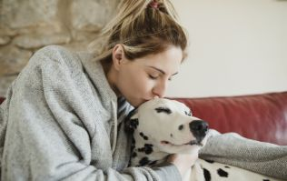 15 per cent of people say they love their pet more than their partner