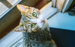 Cat that went missing 10 years ago has just been found