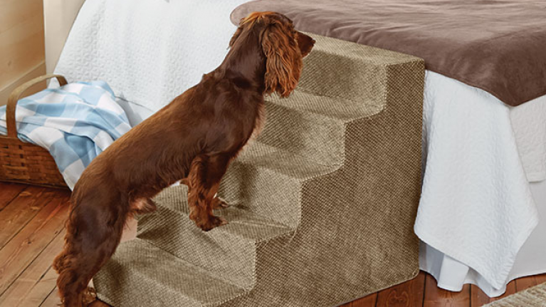 This little mini stairs will help your dog get up and down from your bed