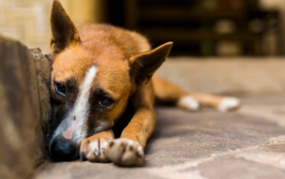 Carlow couple sentenced to 3 years in jail for running puppy farm