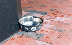 Deadly bacteria in dog bowls puts both animals and owners at risk