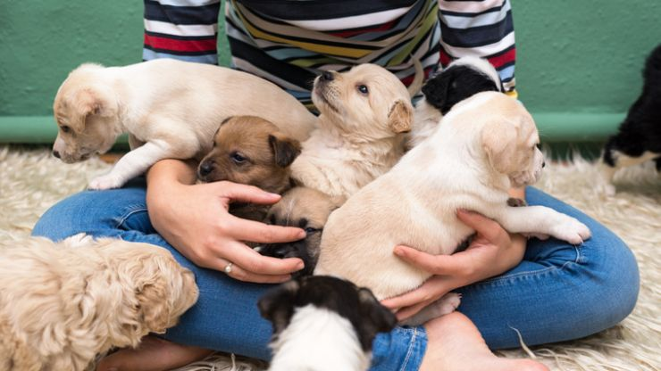 These are the ten most-loved puppy names right now and they're all SO cute