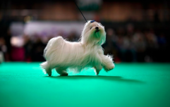 A comprehensive rundown of all the good boys spotted at Crufts 2019