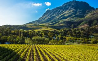 Mad about wine? Cape Town's Wineland is top of our bucket list!
