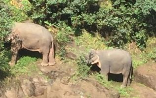Six wild elephants die while trying to rescue each other at Thai waterfall