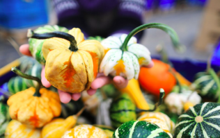 You can now buy adorable mini pumpkins in Tesco for one euro a go